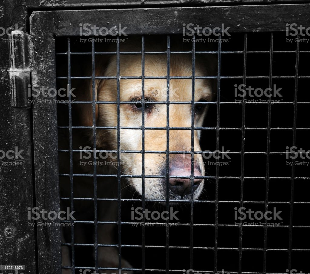 Dog in Cage stock photo