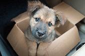dog in carton box