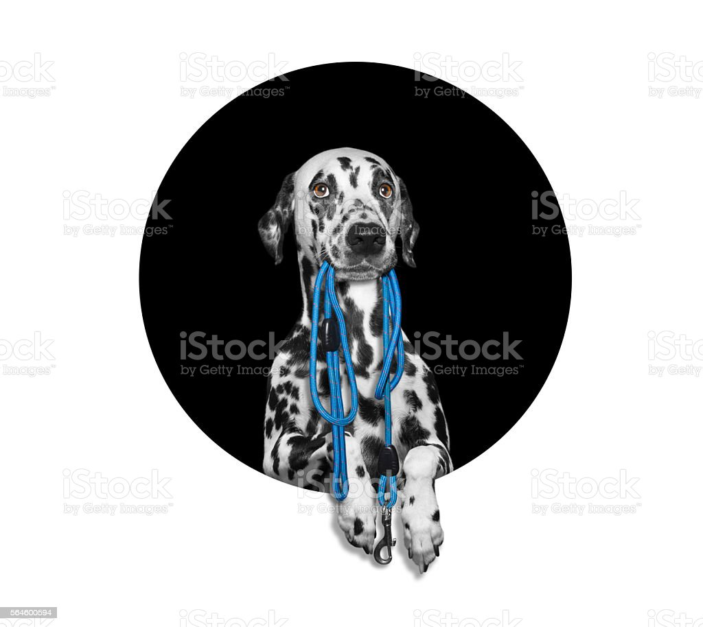 Dog in circle with lead and empty space for text stock photo