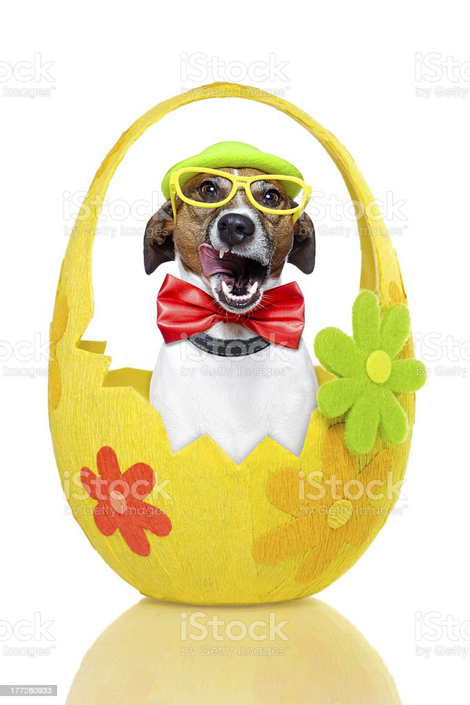 dog in colorful easter egg royalty-free stock photo