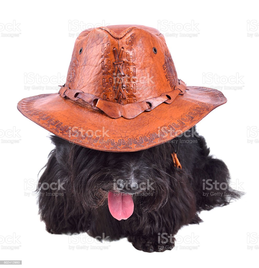 Dog in cowboy hat stock photo
