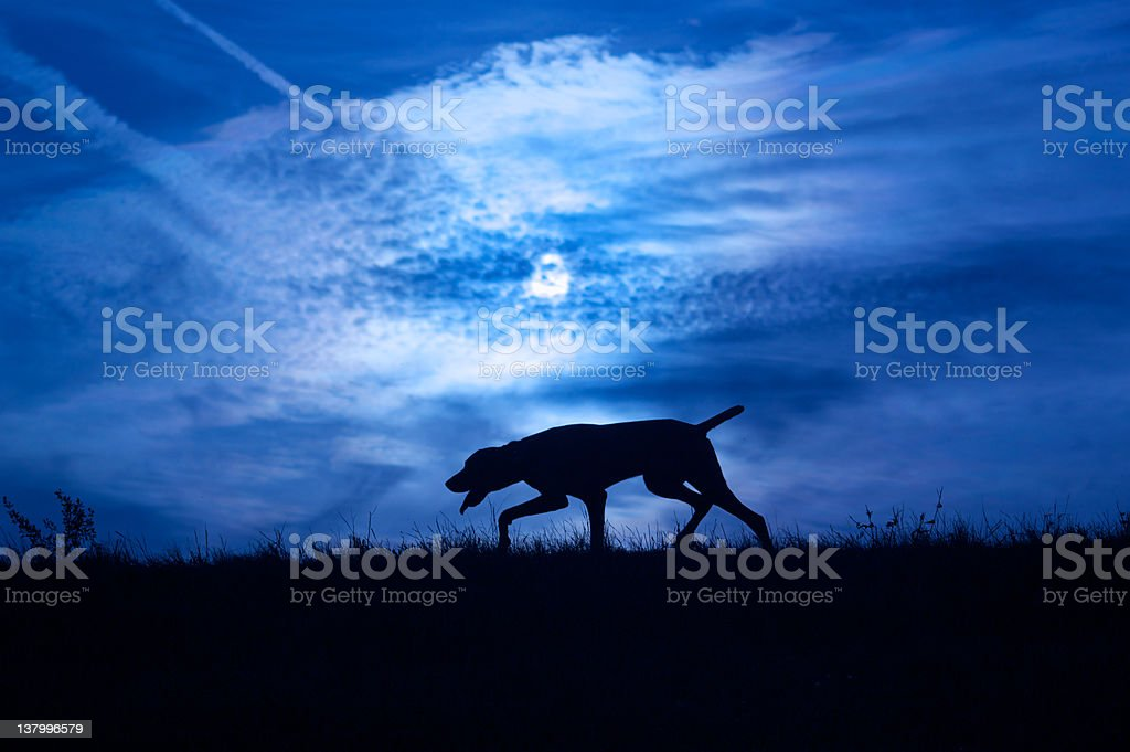 Dog in darkness stock photo