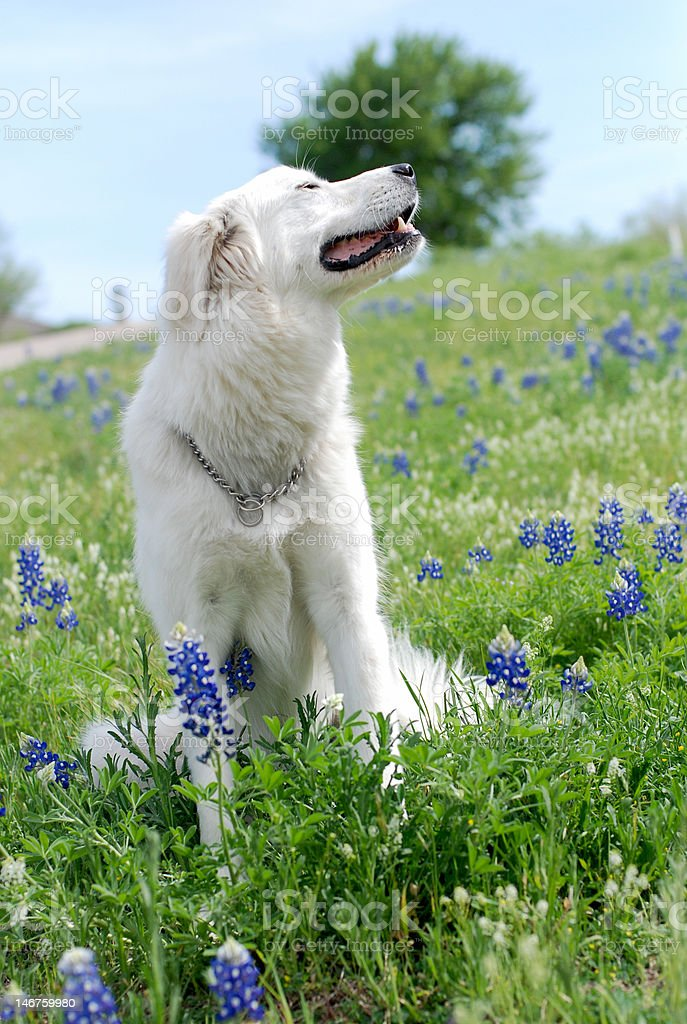 Dog in Field stock photo