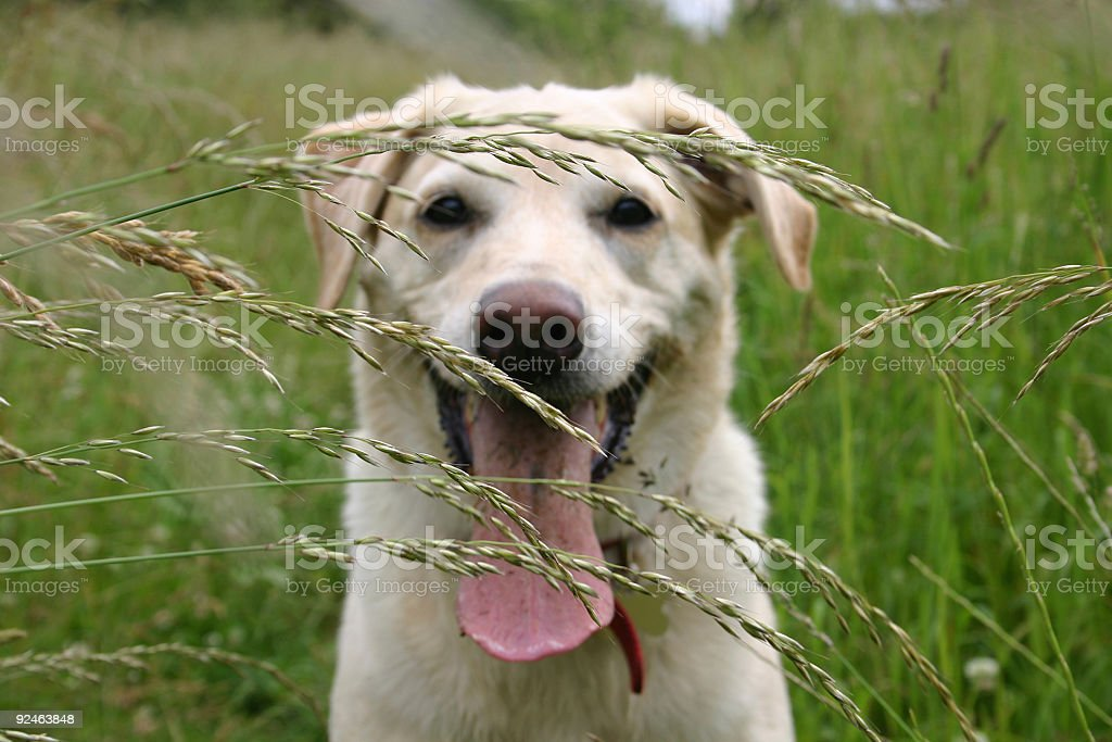 dog in field royalty-free stock photo