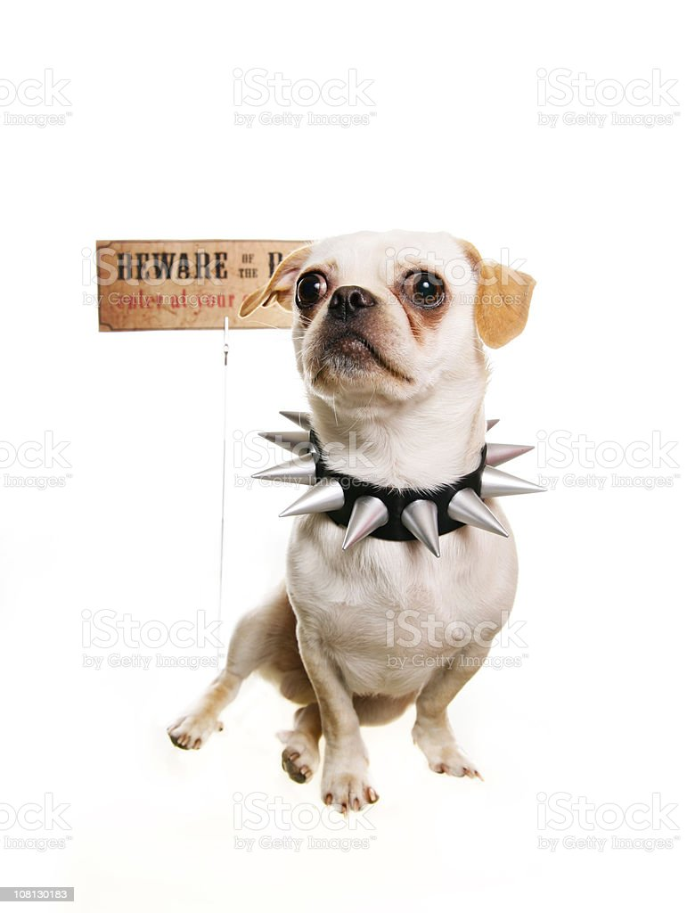 Dog in front of a Warning Sign stock photo