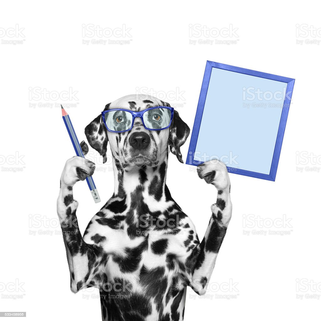 dog in glasses holding a pencil and frame stock photo