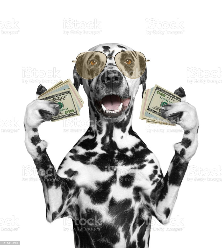 Dog in glasses holds lot of money stock photo