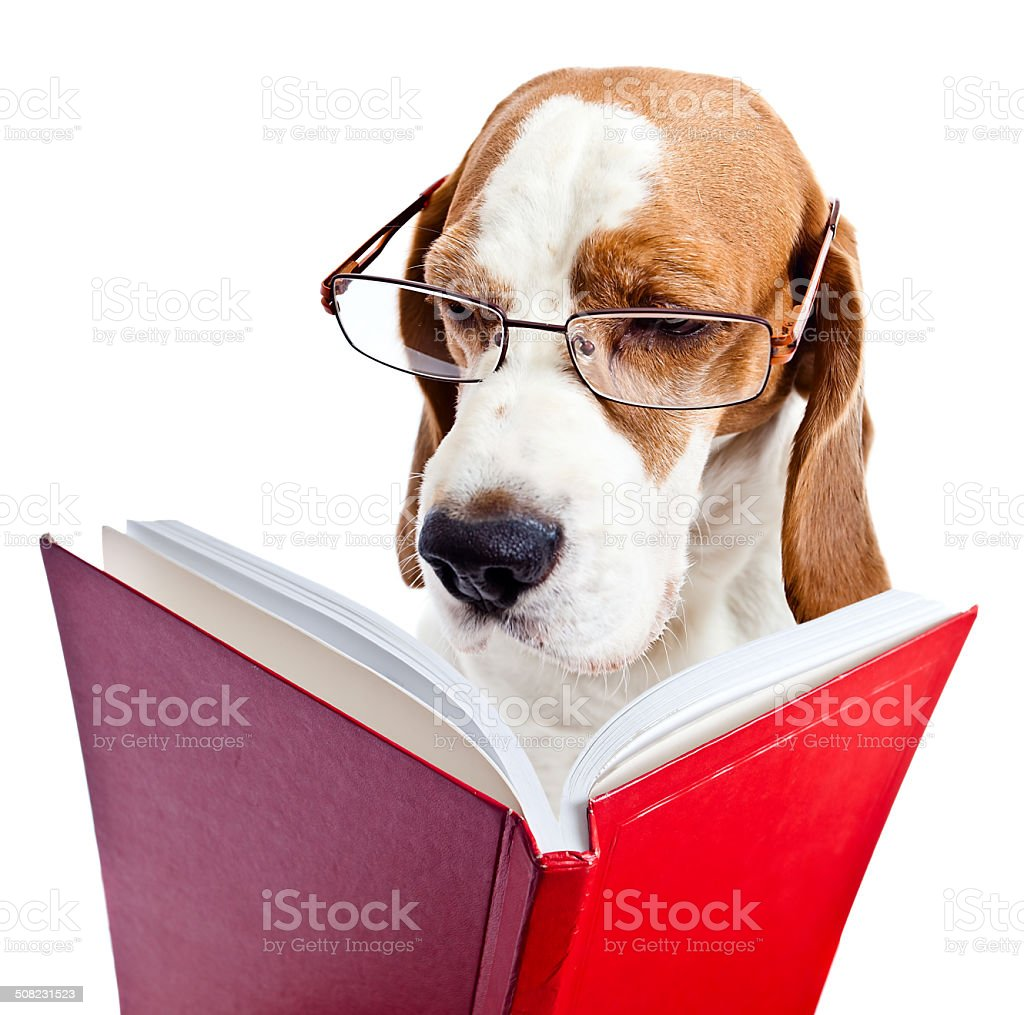 dog in glasses reads the red book stock photo