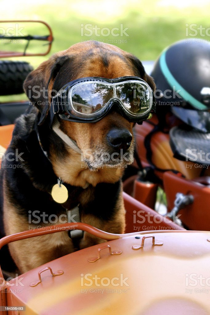 Dog in Goggles on Motorcycle stock photo