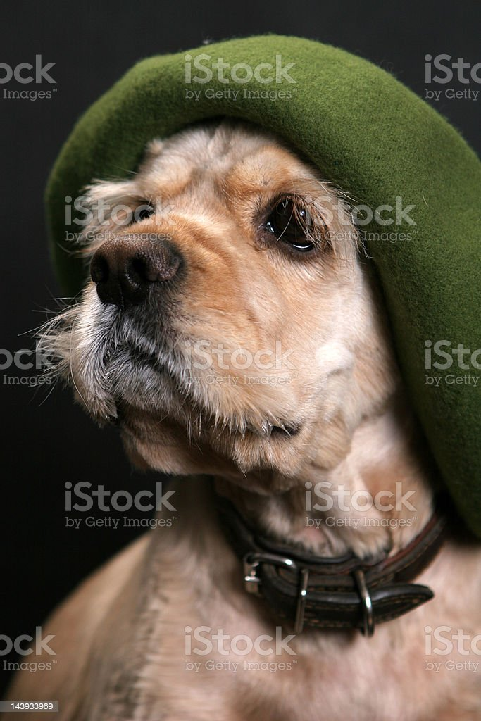 Dog in green hat royalty-free stock photo