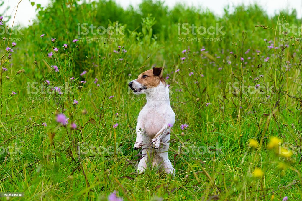 Dog in greenery high grass sitting like groundhog looking around stock photo