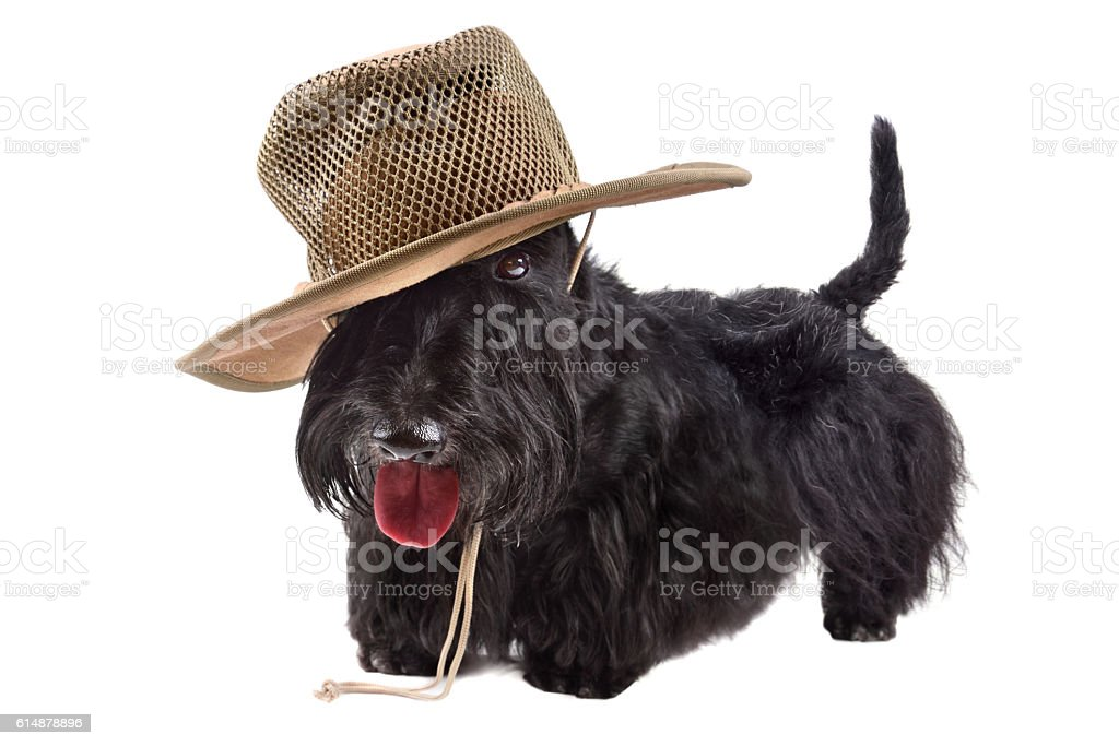 Dog in hat stock photo