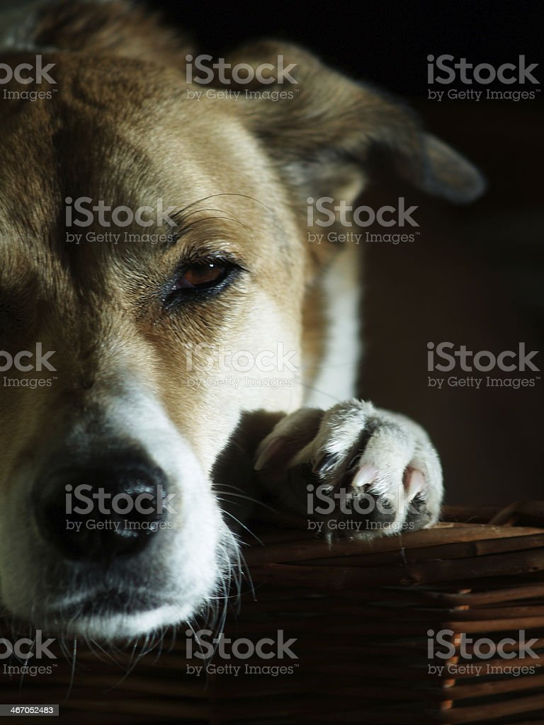 dog in his basket stock photo