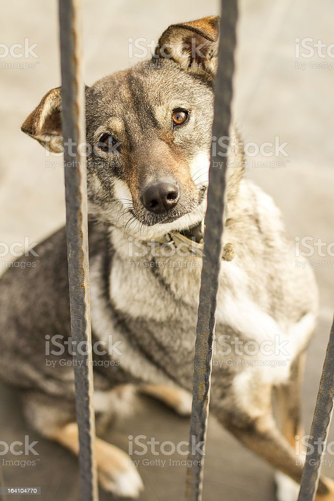 Dog In Jail Waiting For Adoption royalty-free stock photo