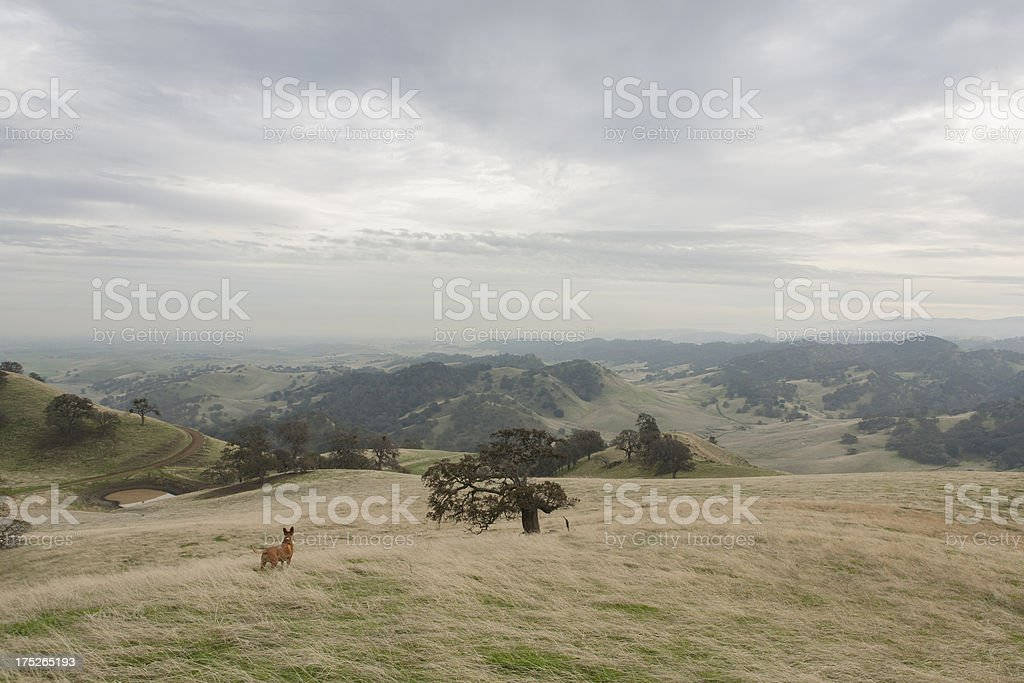 Dog in Landscape stock photo