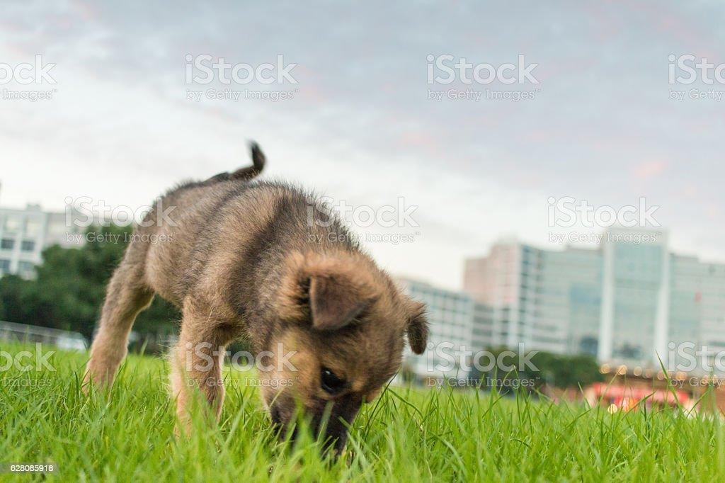 dog in lawn