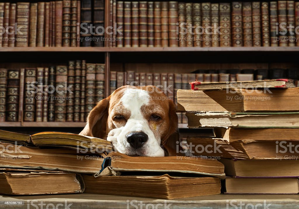 dog in library stock photo