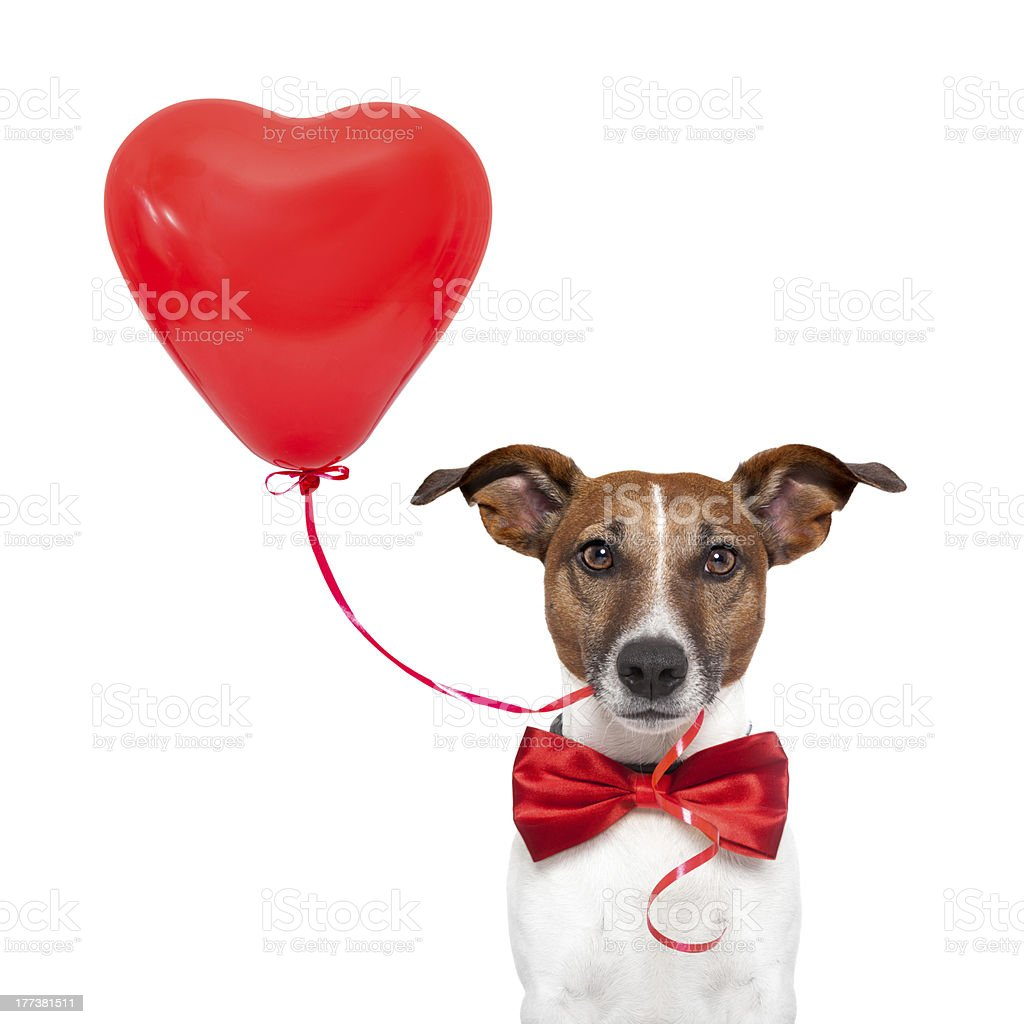 dog in love royalty-free stock photo
