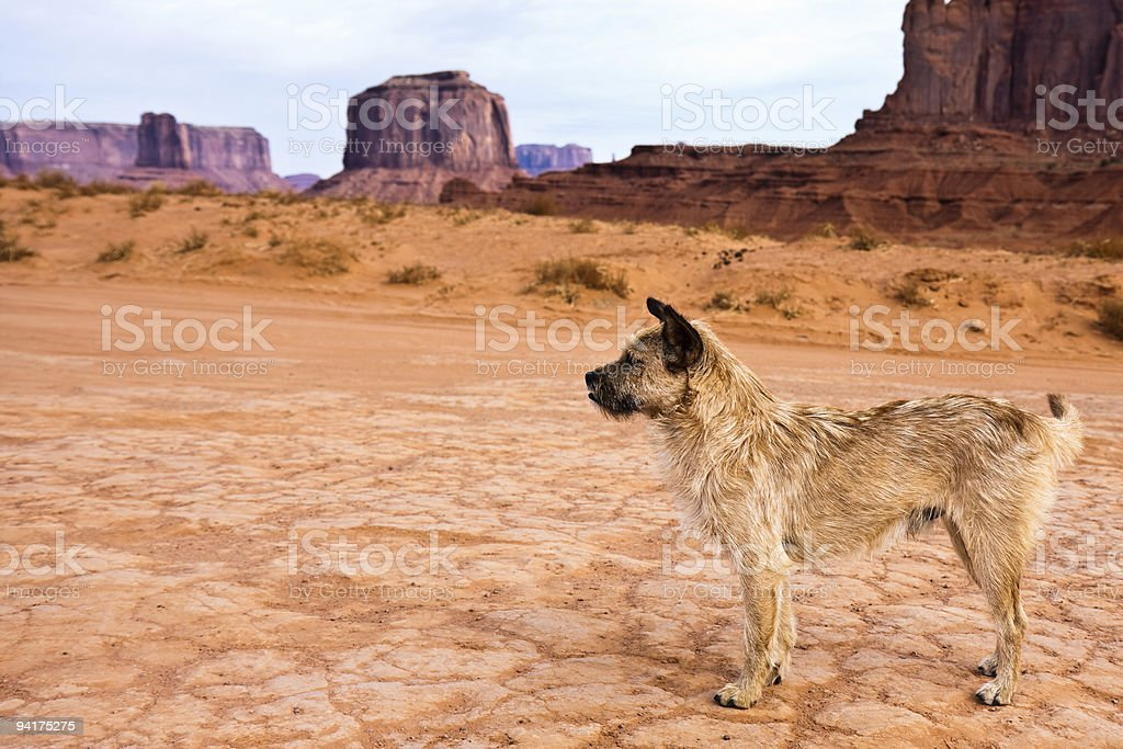 Dog in Monument Valley royalty-free stock photo