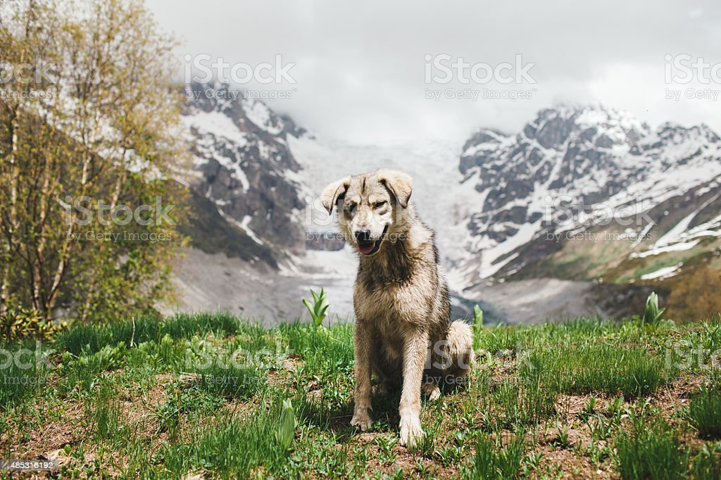 Dog in mountains stock photo
