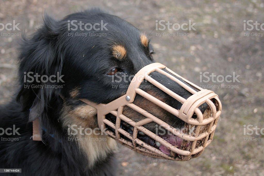 Dog in muzzle stock photo
