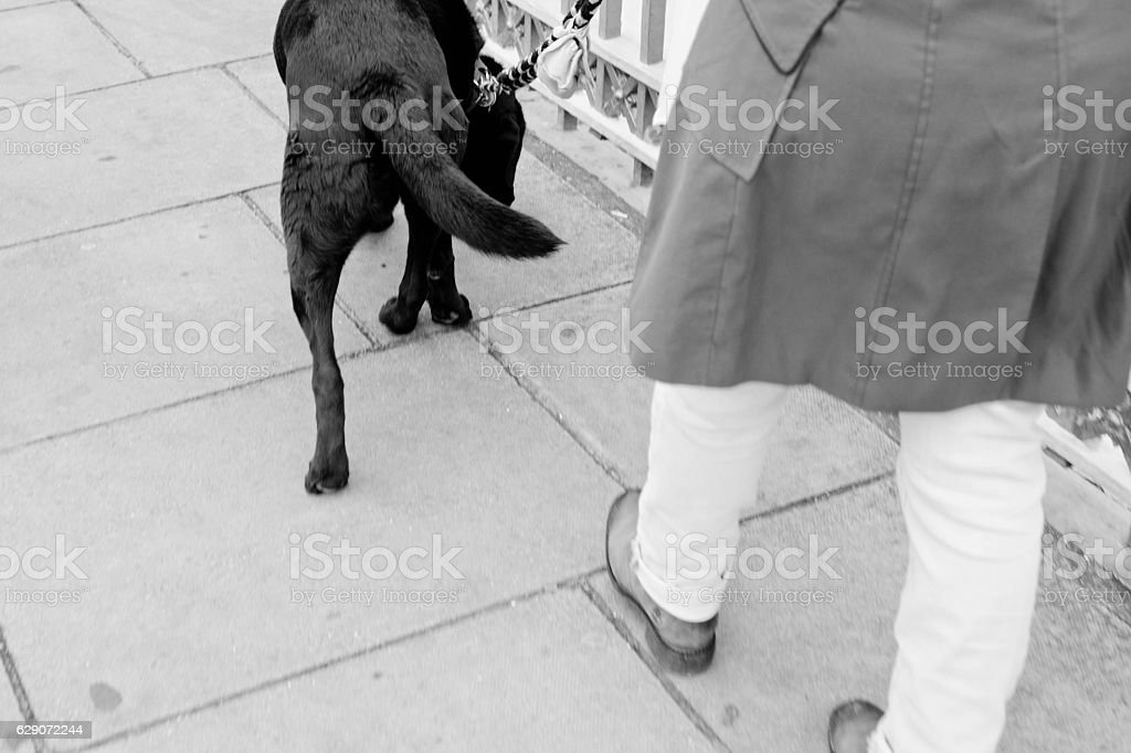 Dog in Nice stock photo