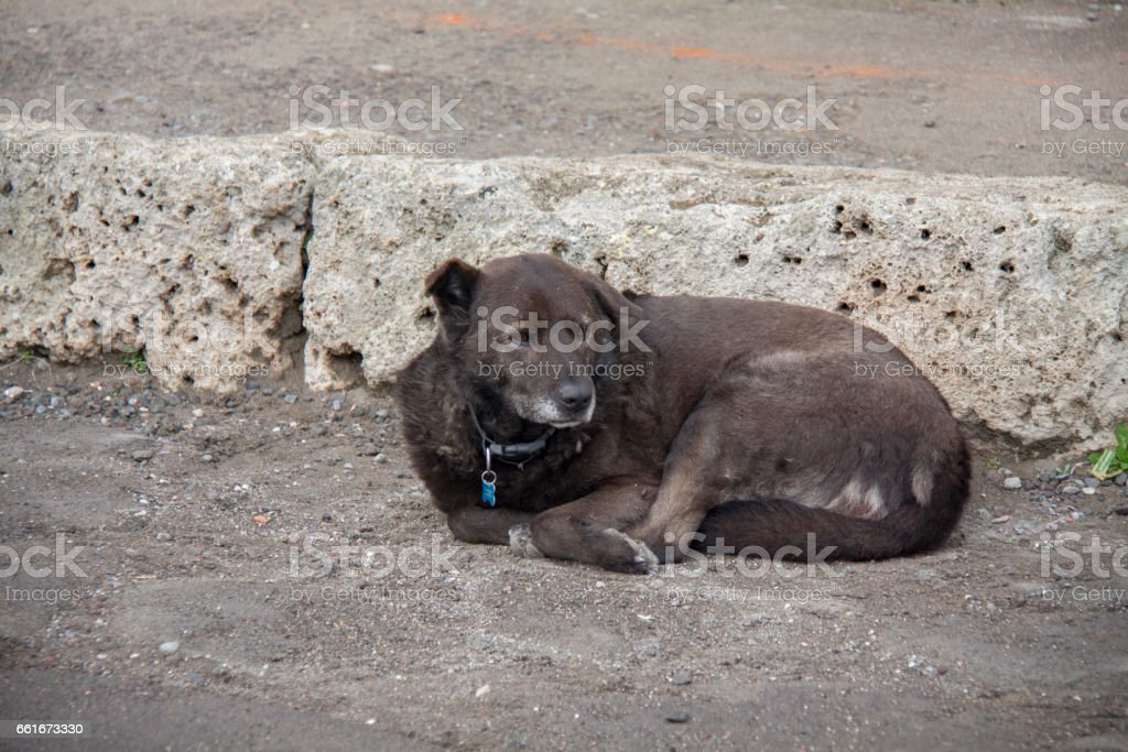 Dog in Pompeii, Naples stock photo