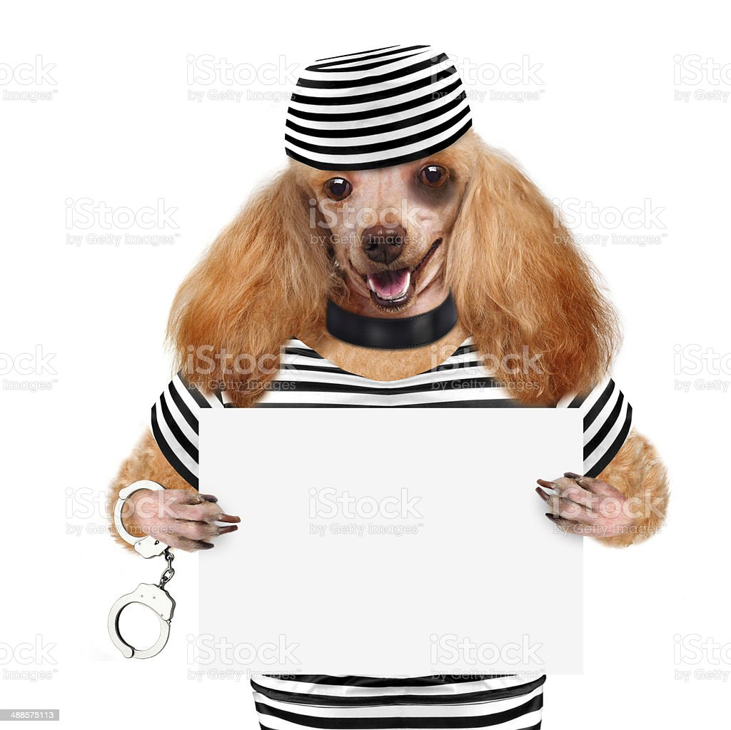 Dog in prison. stock photo