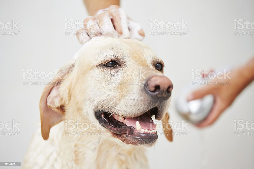 Dog in shower stock photo