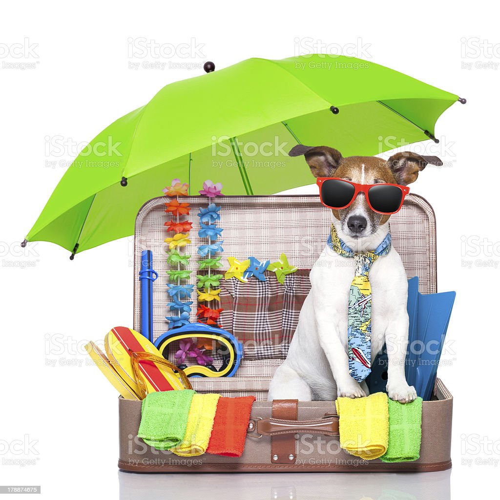 Dog in sunglasses representing summer holiday royalty-free stock photo