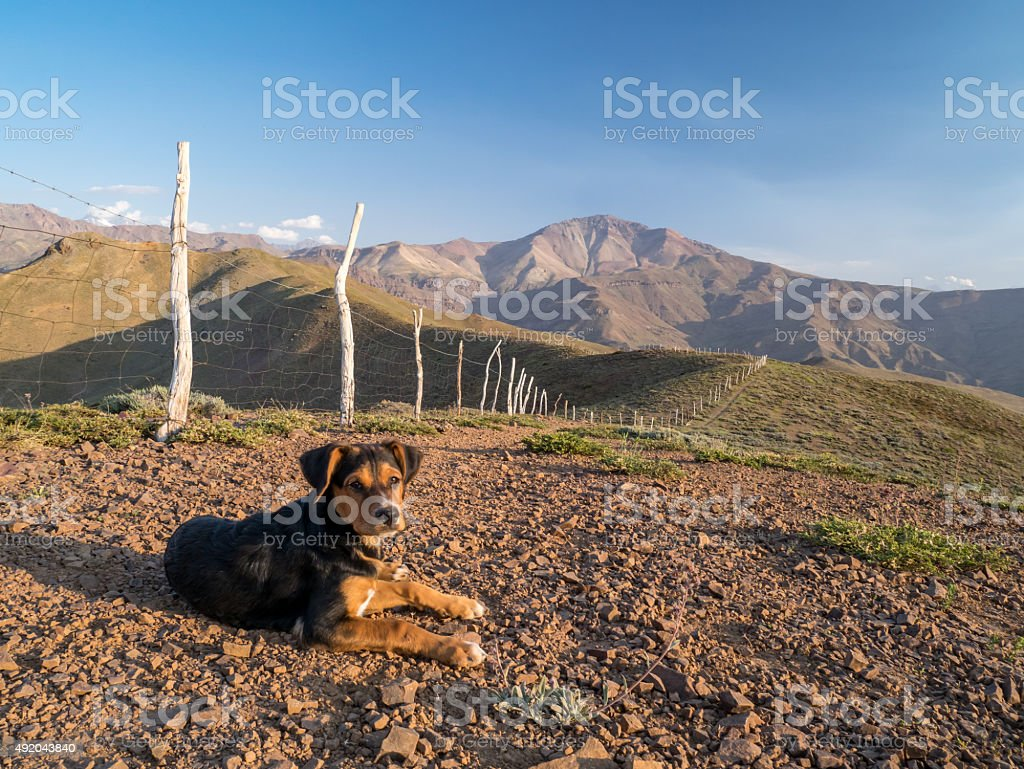 Dog in the Andes royalty-free stock photo