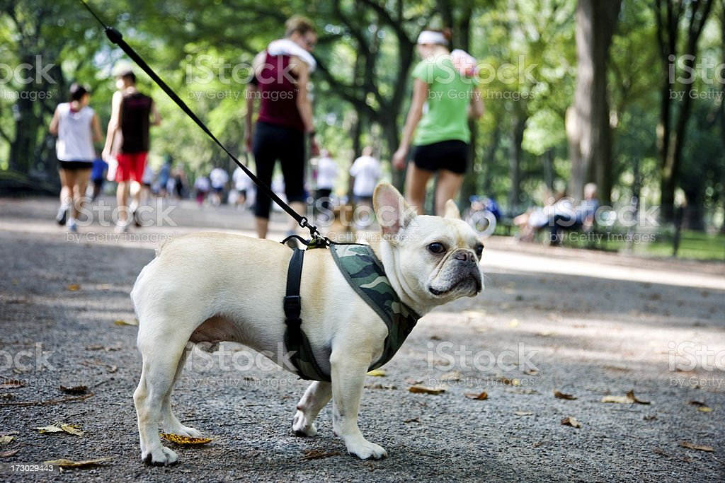 Dog in the Central Park, NY royalty-free stock photo