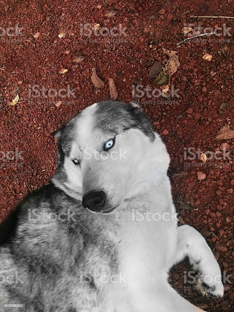 dog in the ground stock photo