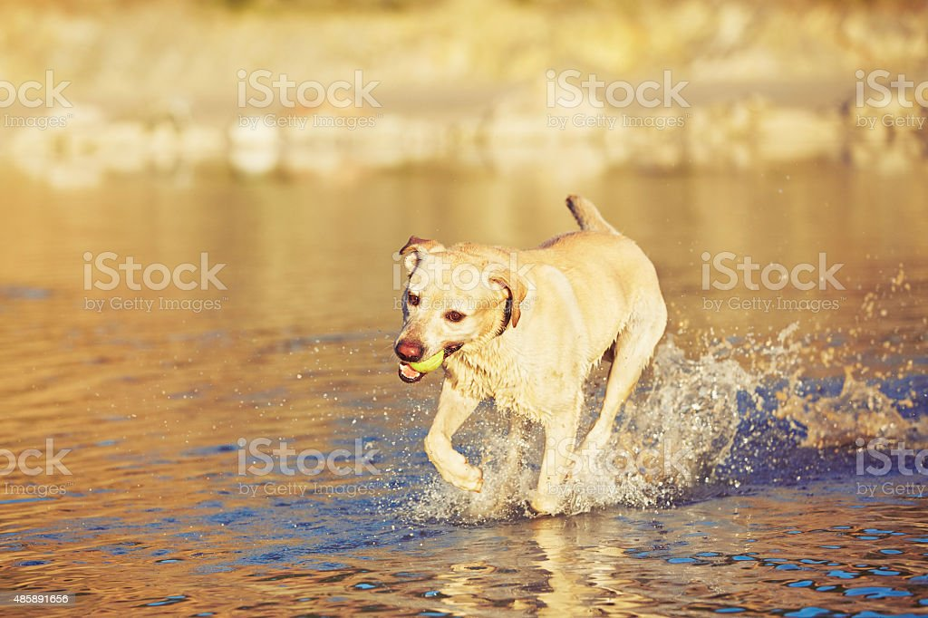Dog in the lake stock photo