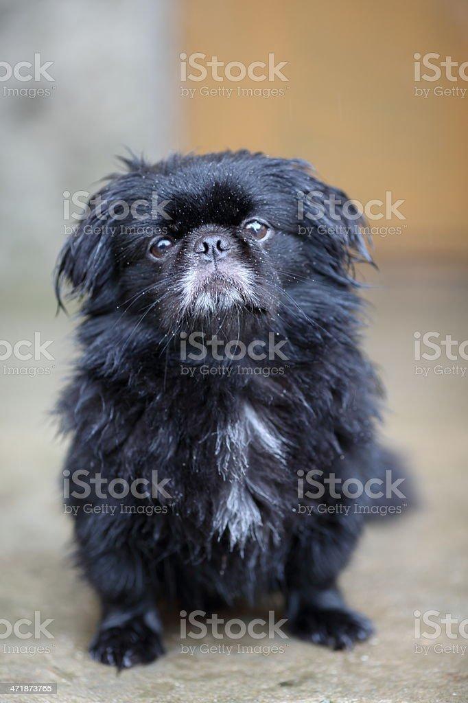 dog in the rain stock photo