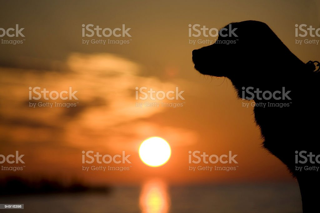 dog in the sunset stock photo