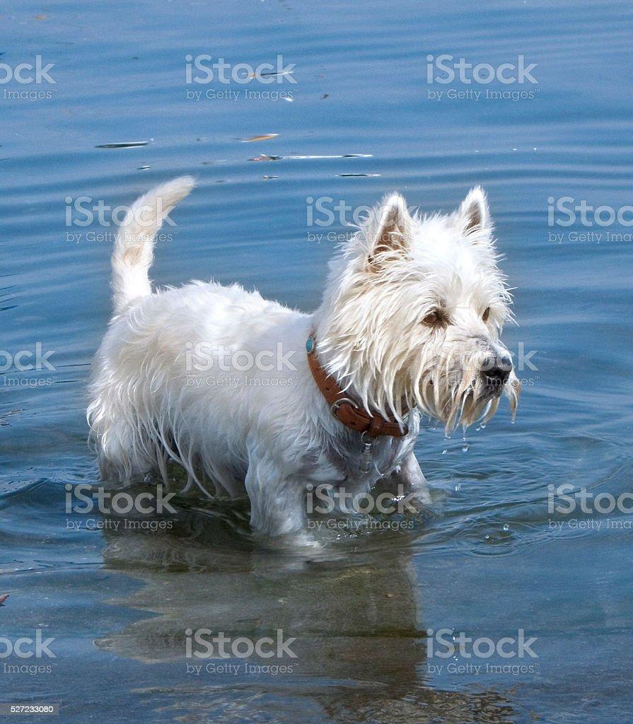 Hund im Wasser stock photo