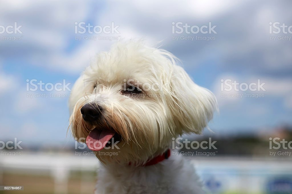 Dog in the wind, watching stock photo
