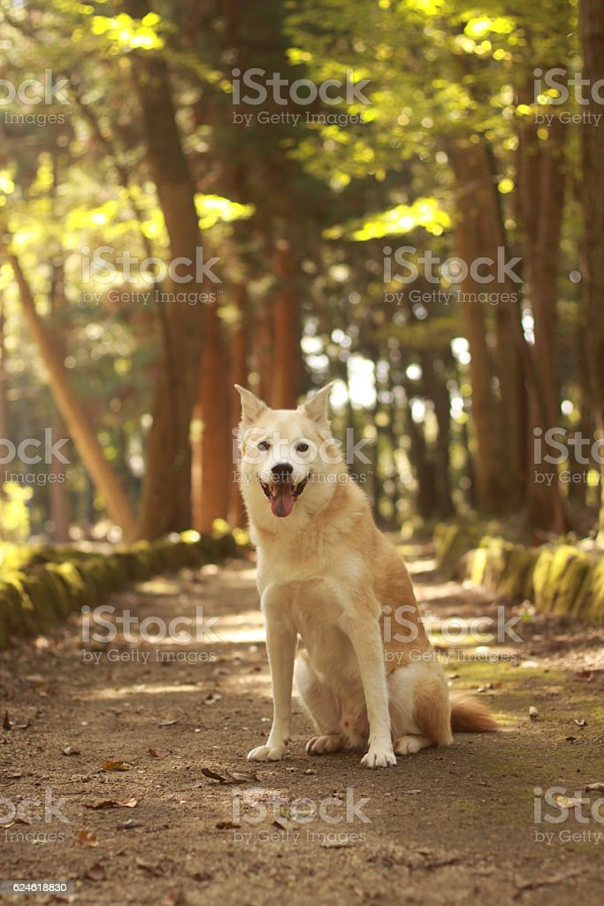 Dog  in the woods stock photo