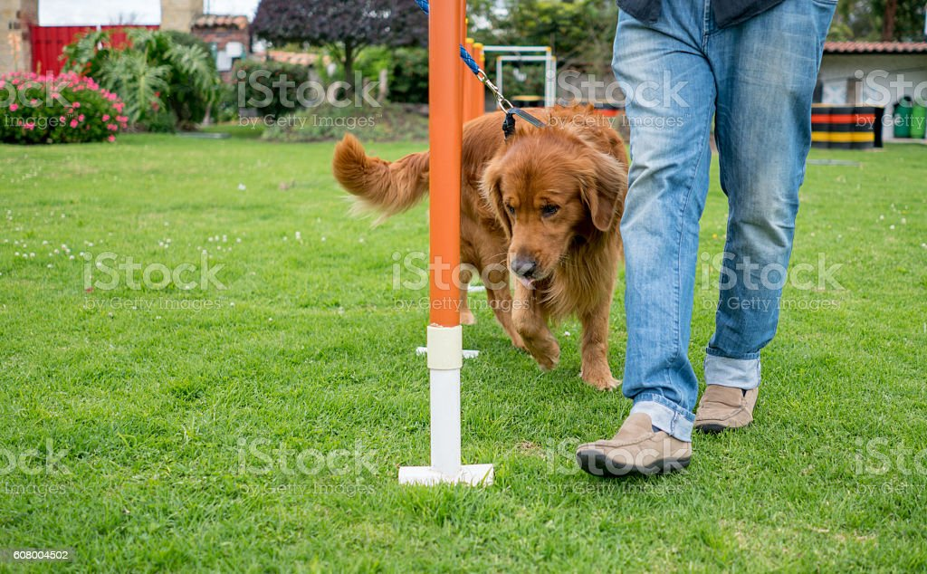 Dog in training stock photo