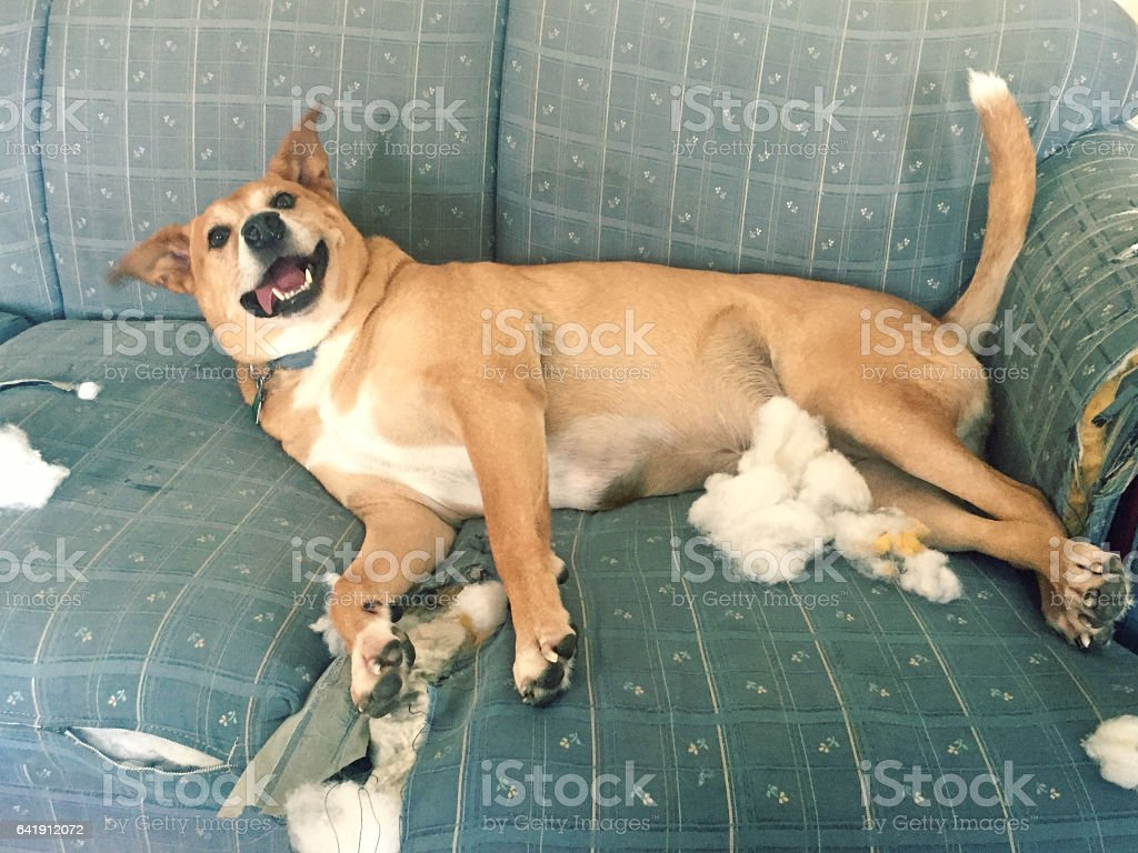 Dog in Trouble stock photo