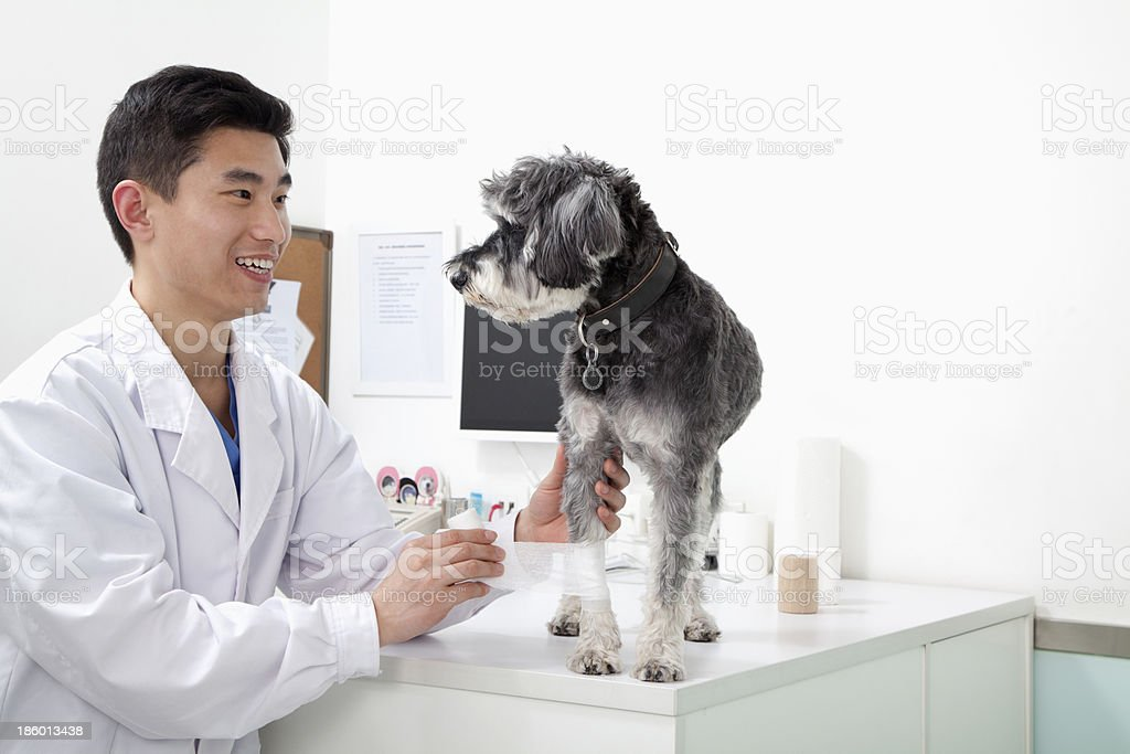Dog in veterinarian's office royalty-free stock photo