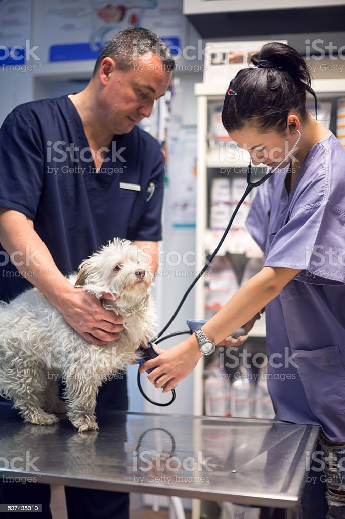 Dog in vet's office stock photo