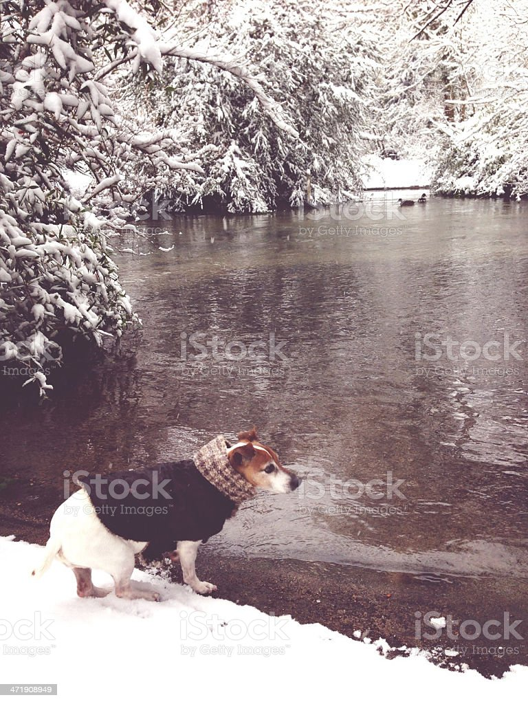 Dog in winter coat by snow covered lake stock photo