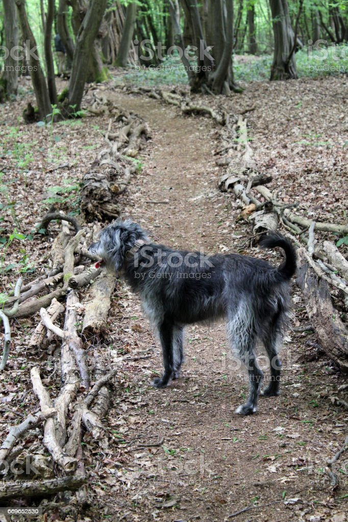 Dog in woodland stock photo