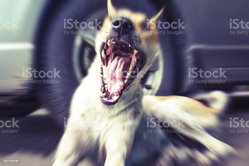 dog indoors stock photo