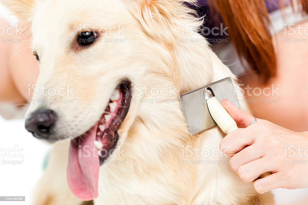A dog is having treatment by a vet royalty-free stock photo
