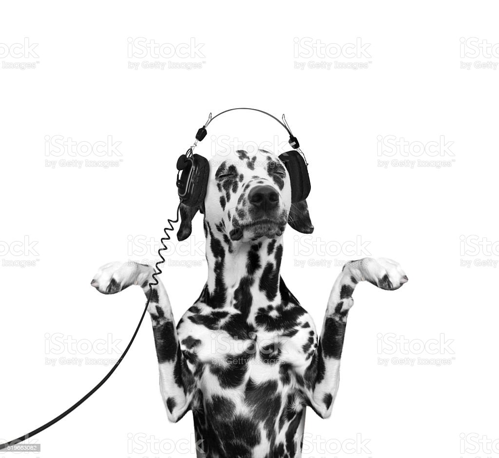 Dog is listening to the music and dancing stock photo