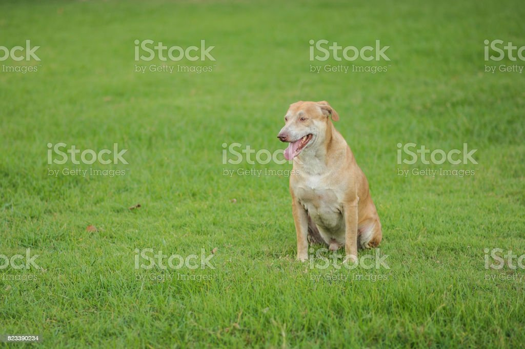 Dog is looking on elsewhere on the grass stock photo