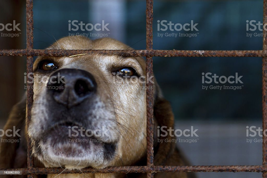 Dog is looking through his prison stock photo